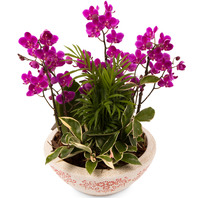미니호접 공기정화식물